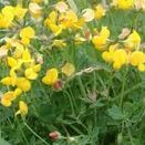 Water Margins Wildflower Mixture 100% additional 16