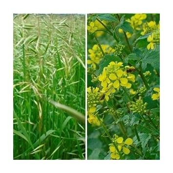 Ecological Focus Area ( EFA ) Catch & Cover Crop Options