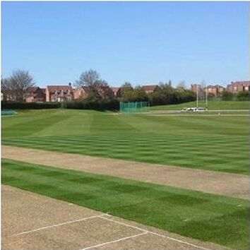 Cricket Strip Premium Grass Seed Mix