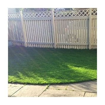 Shaded Areas Grass Seed Mix