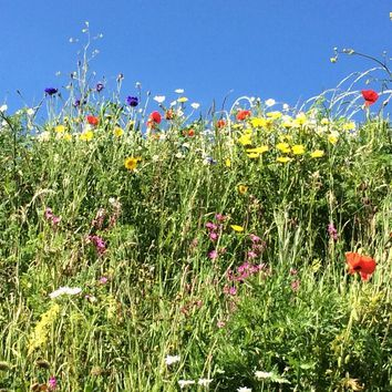 Heritage Hay Meadow & Wildflower Grass Seed Mix