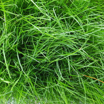 Meadow Fescue Long Term Grass Seed Mix
