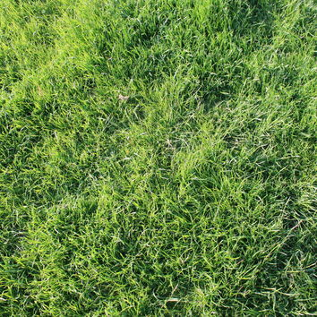 Organic Long Term Grass Seed Mix