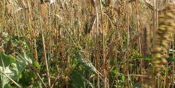 Game Cover Crop Seed Mixtures