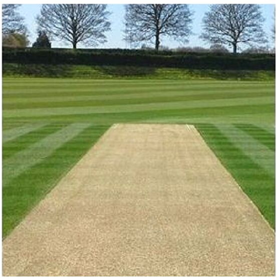Cricket Strip Eco Grass Seed Mix