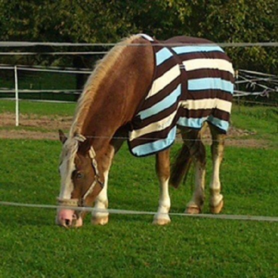 Horse & Pony / Equine Paddock Grass Seed Mix