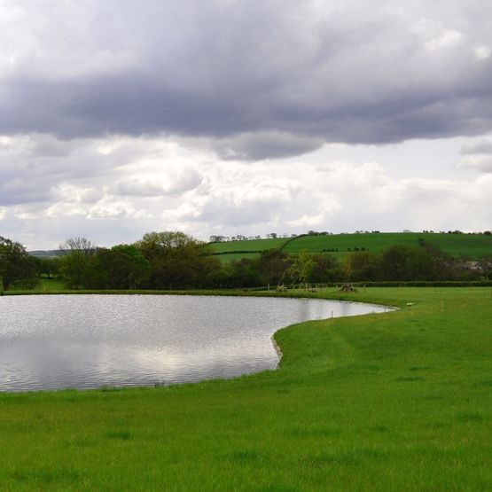 Swales Ponds & Banks